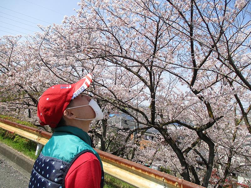 【Ma-Na】お花見💮